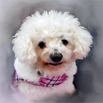 Digital Bichon Frise Portrait