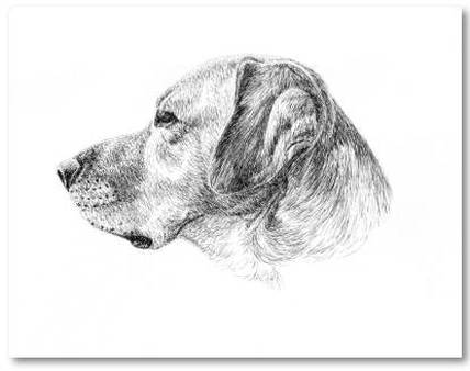 Pen and Ink Dog Art