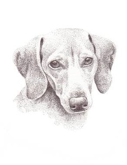 original dog portraits